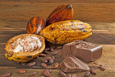 El cacao en Bolivia, un producto que convive con la diversidad biológica